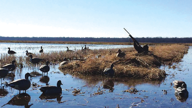 TWRA to Present Public Duck Hunting and Blind Drawing Proposal