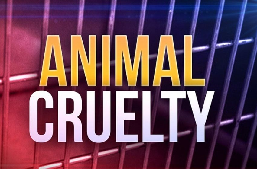 McCracken County man charged in abuse of more than 100 animals