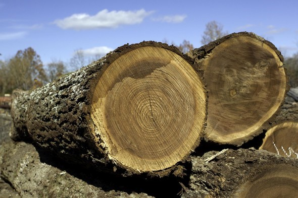 Tennessee Landowners Urged to Be Aware of Timber Thieves