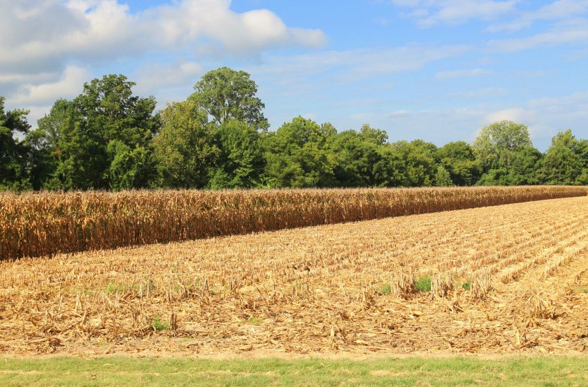 Corn and Soybean Harvest Underway in Obion County